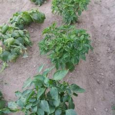 Zucche, peperoncini e peperoni, Orto realizzato presso una CAS per richiedenti asilo, Veneto