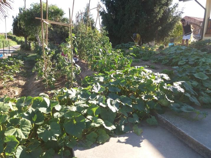 Zucche, pomodori e cetrioli nell'orto realizzato presso una struttura CAS per rifugiati richiedenti Asilo, Veneto